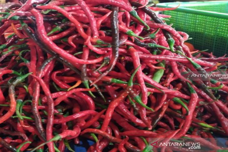 Harga cabai merah di Sumut anjlok tajam akibat permintaan turun