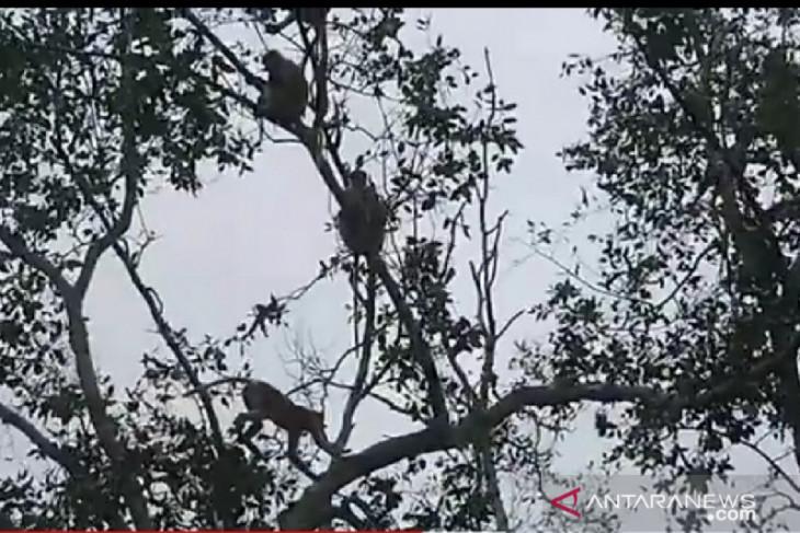 Penyelamatan mangrove di PPU perlu intensifikasi-ekstensifikasi