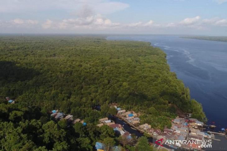Pegiat lingkungan harap Kubu Raya bisa jadi pusat mangrove dunia