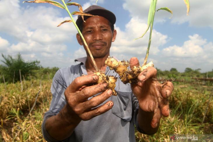 Keterbatasan pupuk bersubsidi jadi kendala bagi pertanian Kubu Raya