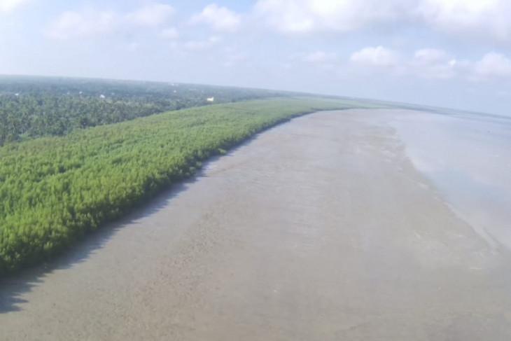 Penanaman mangrove di kawasan pesisir Desa Pasir Mempawah capai 35 hektare