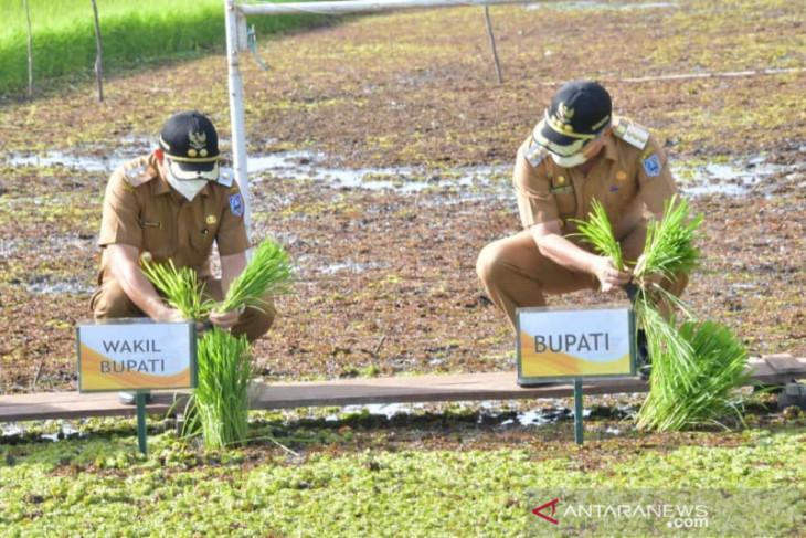 Syukuran tanam padi manfaatkan Kayapu di lahan rawa Poktan Cinta Maju