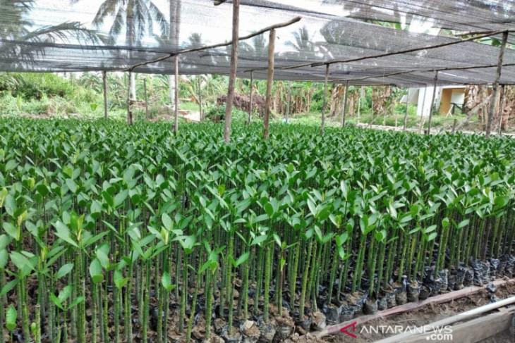 PLN tanam 560.660 pohon di Pulau Perling