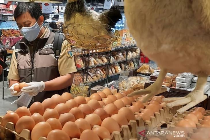 Angka kematian ayam petelur semakin menurun