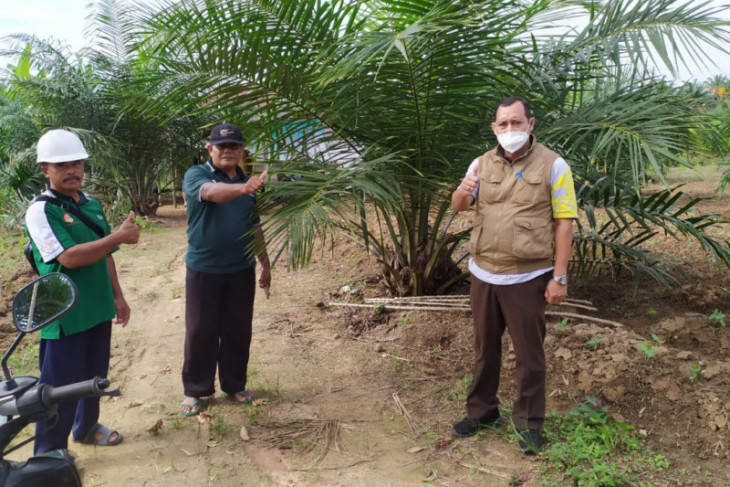Petani Paser mulai rasakan manfaat program replanting