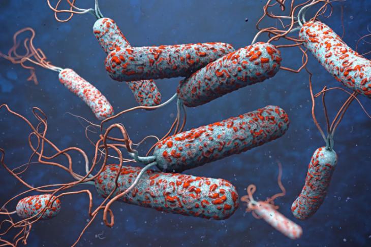 12 orang meninggal akibat wabah kolera di Niger