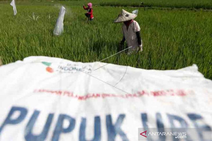 Stok pupuk bersubsidi di Aceh masih aman, ini jumlahnya