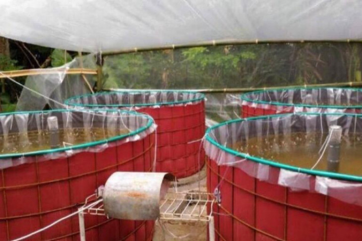 KKP terus dorong penyebaran teknologi bioflok untuk tingkatkan produksi budidaya perikanan