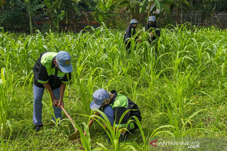 Upaya pengembangan wirausaha petani muda