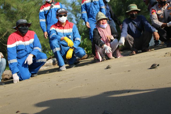 219 bayi tuntong Laut dilepasliarkan ke perairan Selat Malaka