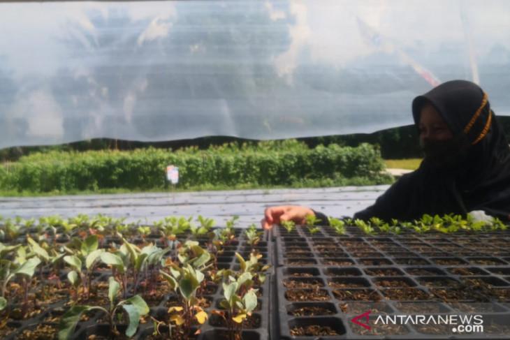 Bank Kalsel tingkatkan perekonomian Desa Jingah Babaris melalui pertanian