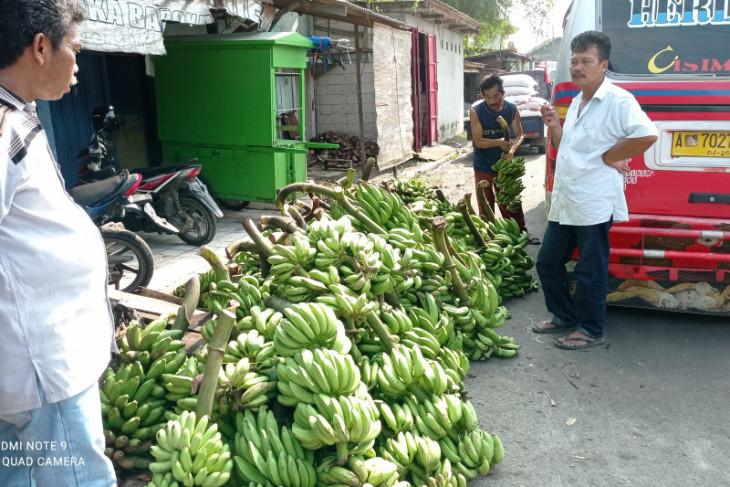 Omzet pedagang pisang  di Lebak naik di tengah pandemi COVID-19