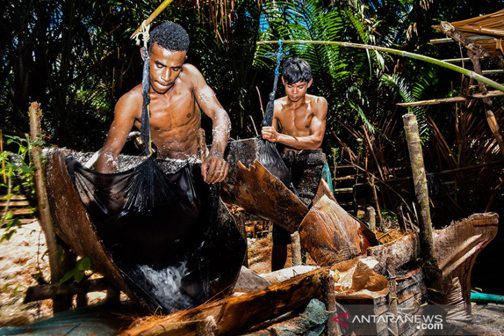 Traditional sago processing continues to flourish in Maluku