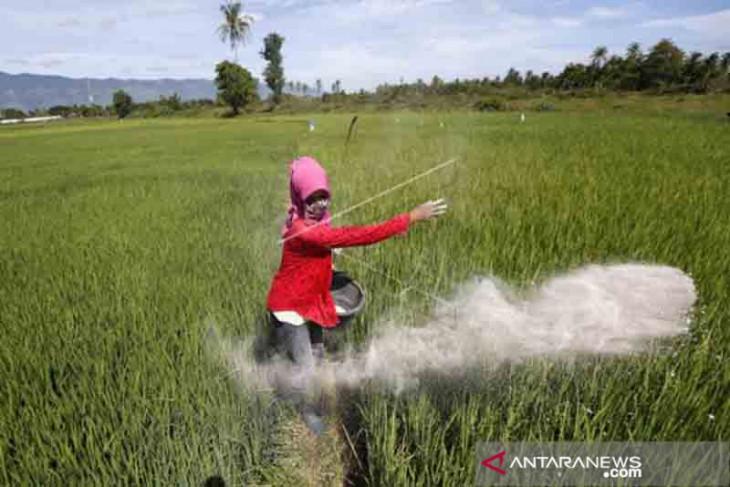 Petani Kota Bengkulu keluhkan kelangkaan pupuk subsidi