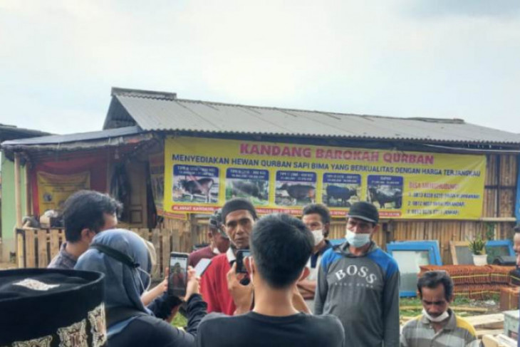 Pedagang sapi kurban Bima di Depok tertipu hingga rugi Rp1,4 miliar