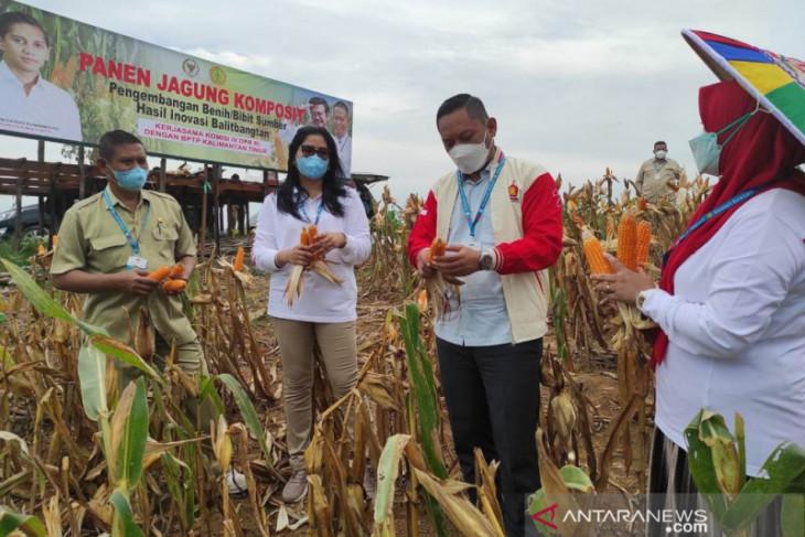 Dua lokasi di Kukar dijadikan pengembangan bibit varietas jagung Lamuru