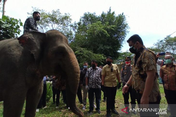 Pemkot Medan fokus datangkan investor kembangkan wisata Medan Zoo