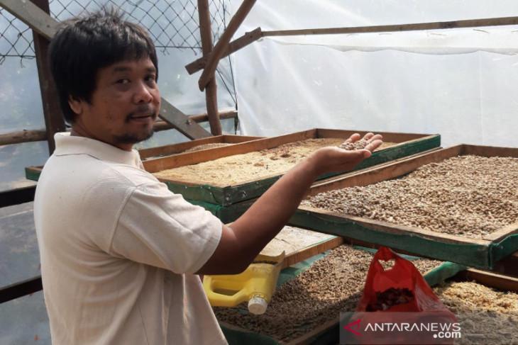 Peran pokdakan Karya Baru dan kemandirian pakan ikan di Jeruju Besar
