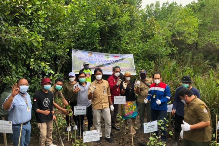 Pertamina Gas Kalimantan tanam 200 mangrove