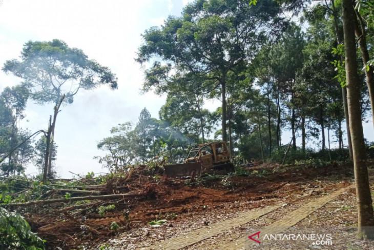 Penebangan liar di Bogor dikhawatir berbuah bencana
