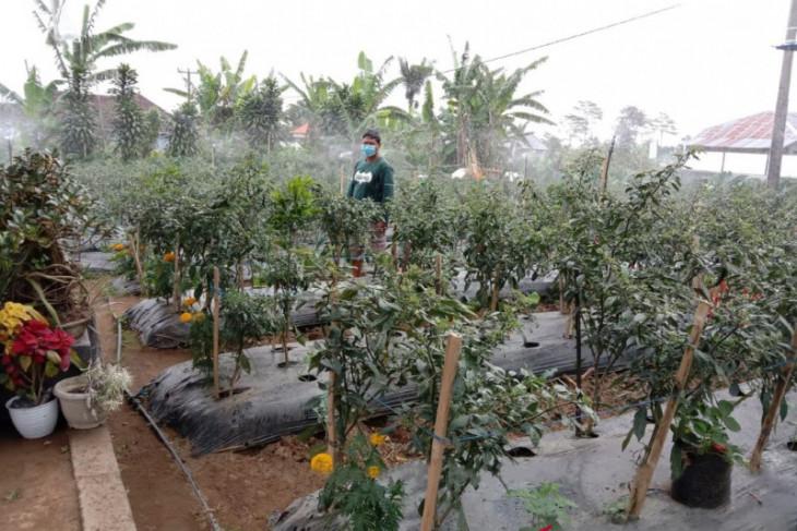 PLN Bali ajak Petani Modern manfaatkan Listrik tekan Biaya Produksi