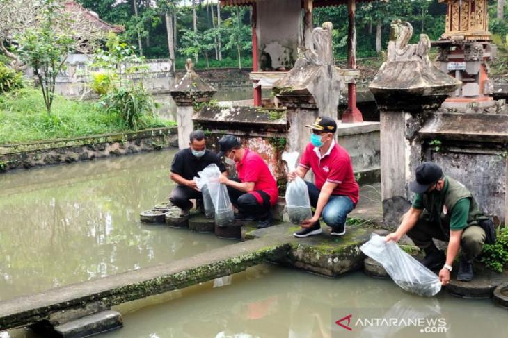 Wakil Bupati Bangli tebar benih ikan nila di Pura Langgar