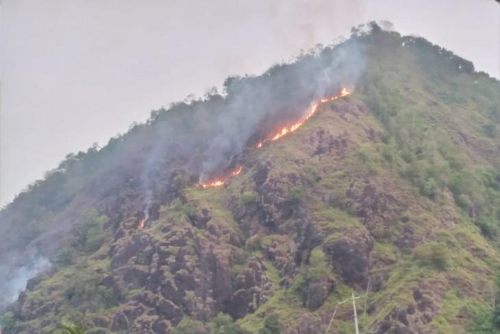 Lima hektare lahan lereng Gunung Puncak Habibie terbakar
