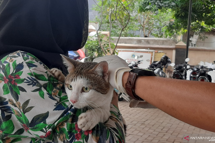 Hundreds of pets in Jakarta vaccinated against rabies