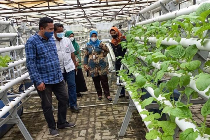 Perluas pasar, Polbangtan Medan Jajaki kerjasama dengan Lapakbuah.Com