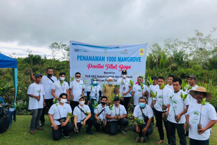 Jaga keseimbangan, PLN UP3 Subulussalam tanam 1.000 mangrove di Aceh Singkil
