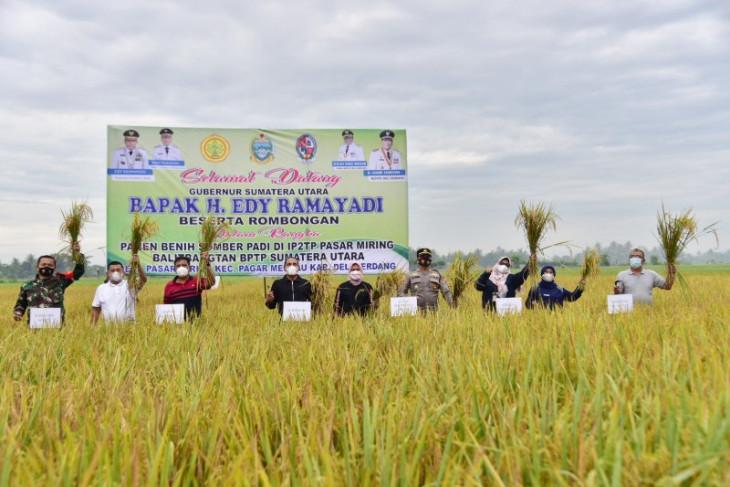 Sumut targetkan produksi padi pada September 420.218 ton