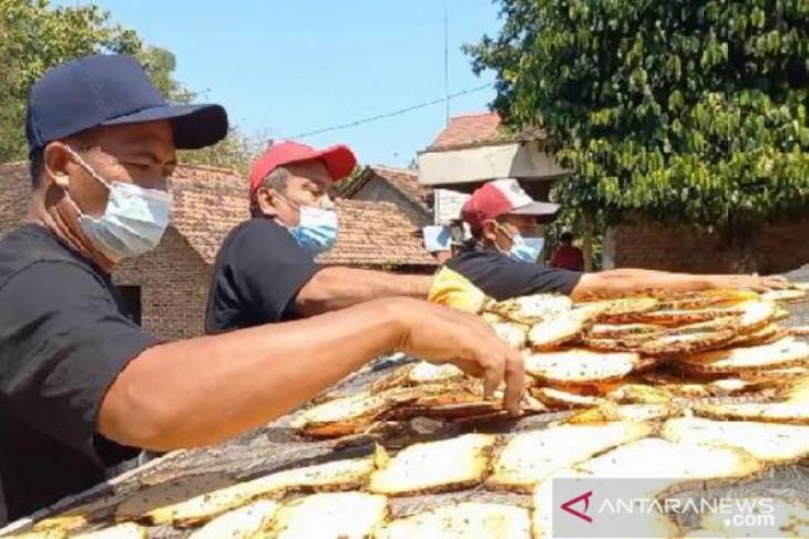 Harga anjlok, petani porang Madiun jual hasil panen dalam bentuk