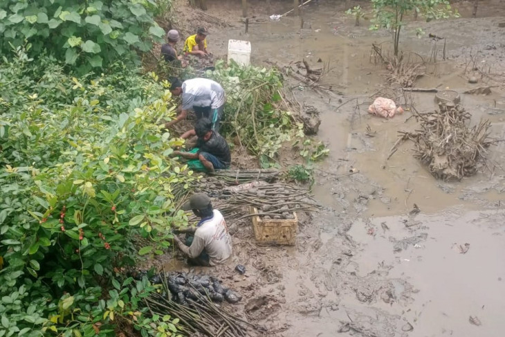 mangrove-rehabilitation