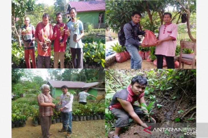 Masyarakat Luat Lombang Tapsel kelola koridor orangutan Tapanuli