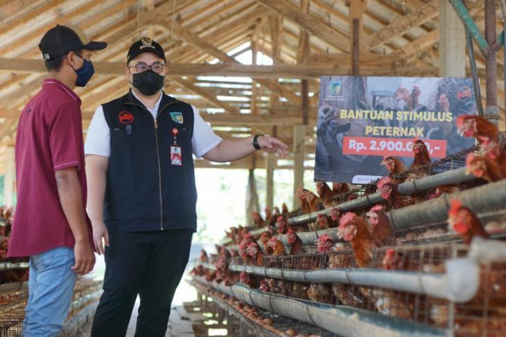 Pemkab Kediri beri stimulus uang tunai Rp2,9 juta per peternak