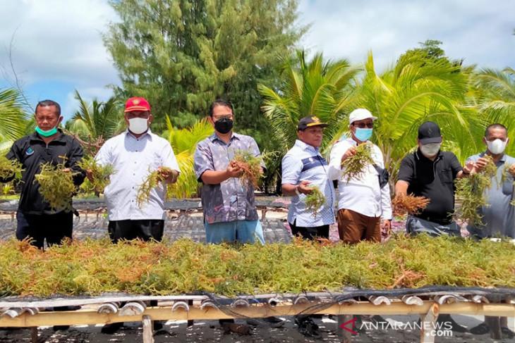 Bupati Malra paparkan kesiapan dukung Seaweed Estate ke KKP begini penjelasannya
