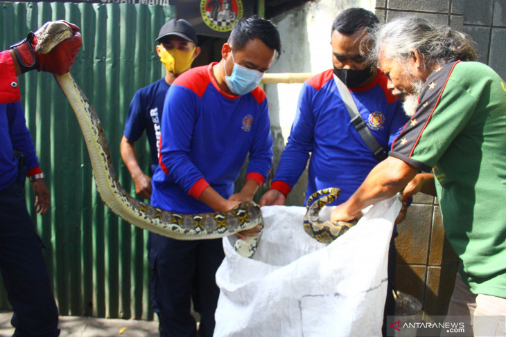 Evakuasi Ular di Warung Kopi