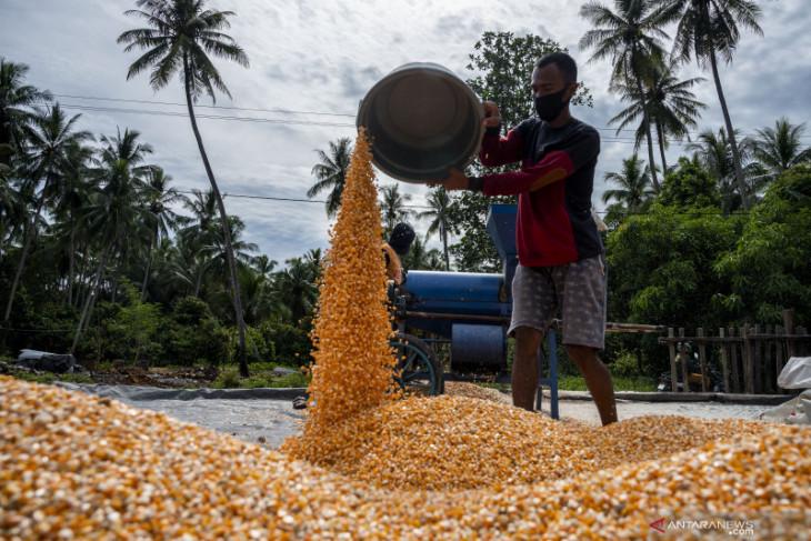 OJK dorong perbankan perbesar penyaluran KUR bagi UMKM Gorontalo