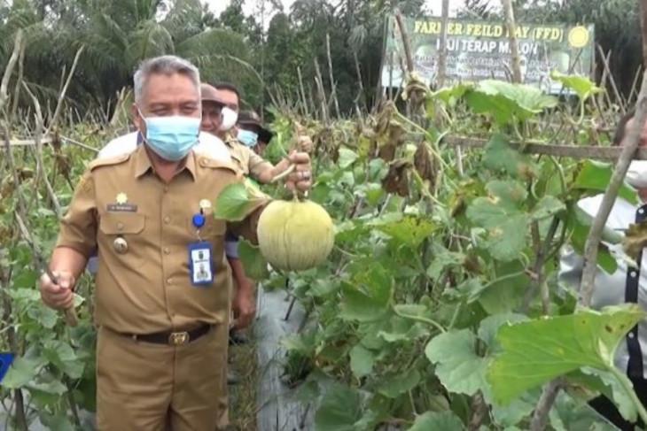 BPP Bintang Ara budidayakan melon varietas grasia