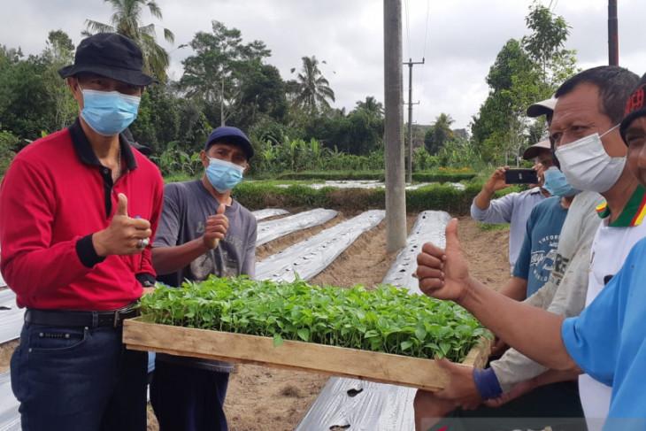 Pemkab Badung antisipasi kelangkaan-kenaikan harga cabai