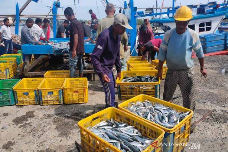Tangkapan ikan nelayan Aceh Timur melimpah