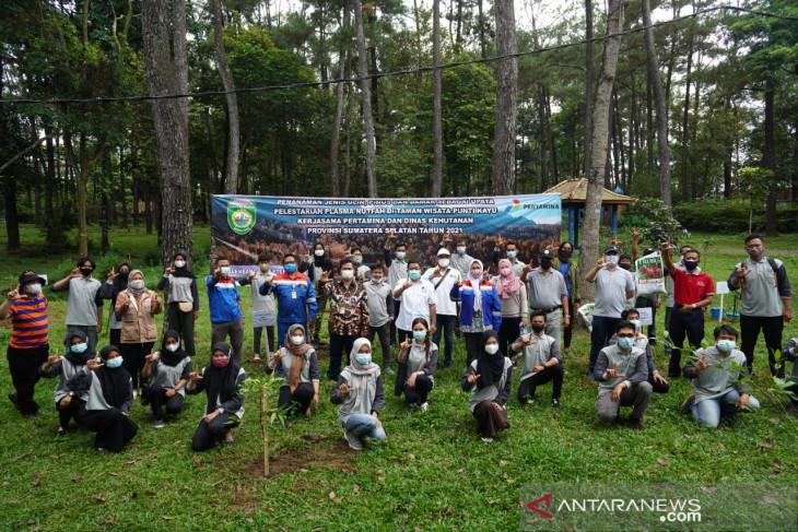 Pertamina gandeng Dinas Kehutanan Sumatera Selatan lestarikan pohon unglen