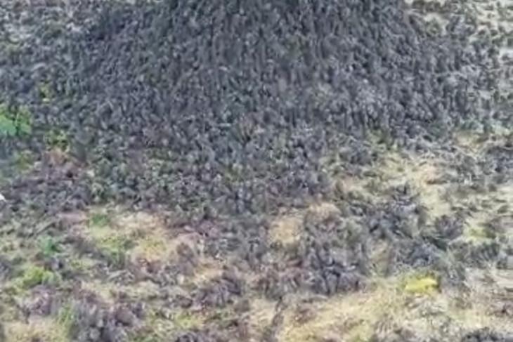 Kematian burung pipit dan  bioindikator kualitas lingkungan