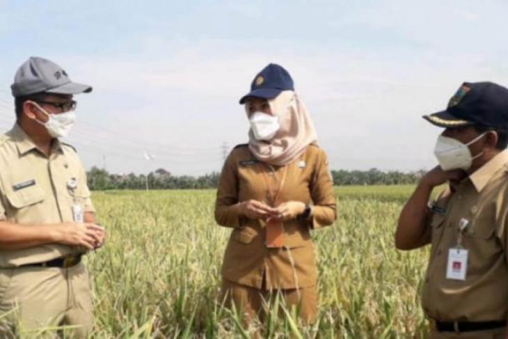 Berkat pelatihan intensif, SDM petani di Sulsel semakin berkualitas