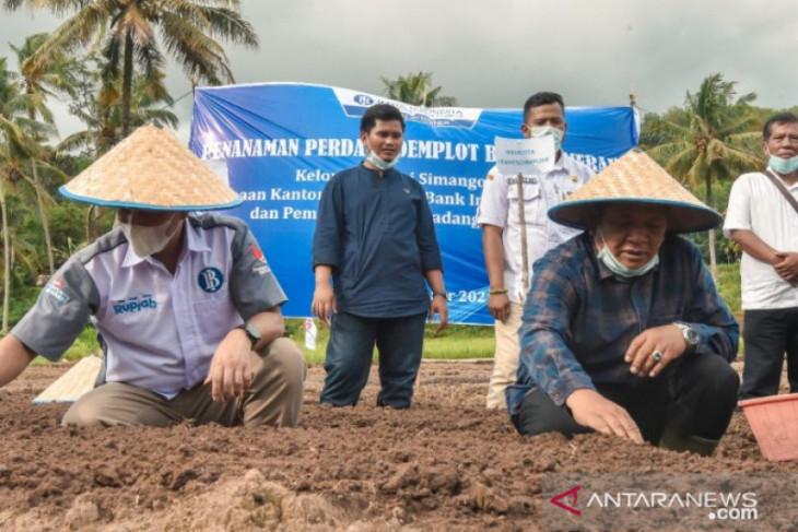 Bank Indonesia bersama Irsan Efendi  tanam bawang merah bersama