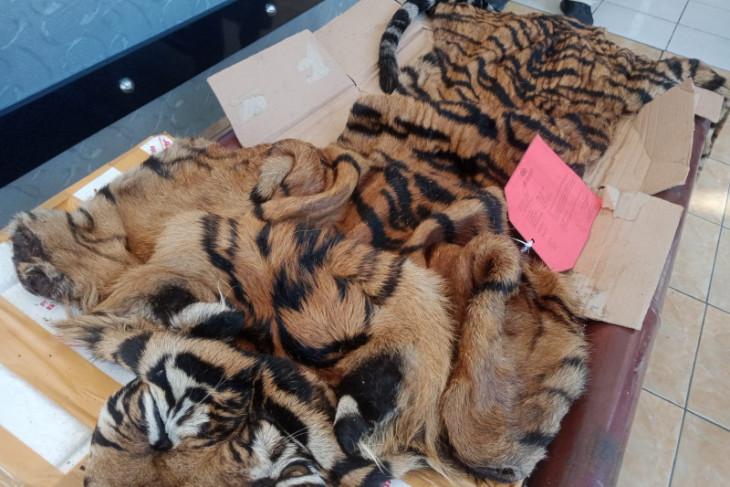 Petugas gagalkan penyelundupan kulit harimau sumatera