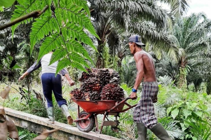 Gapki terus gaungkan sawit berkelanjutan untuk kesejahteraan dan lingkungan
