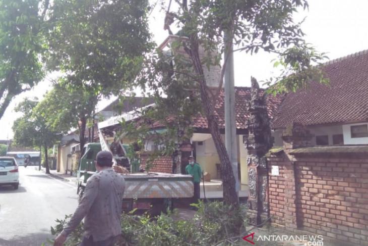 DLHK Denpasar pangkas pohon perindang