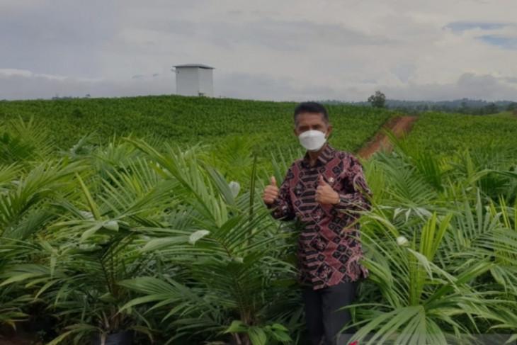 Harga sawit di Kalbar naik berdampak peningkatan kesejahteraan petani