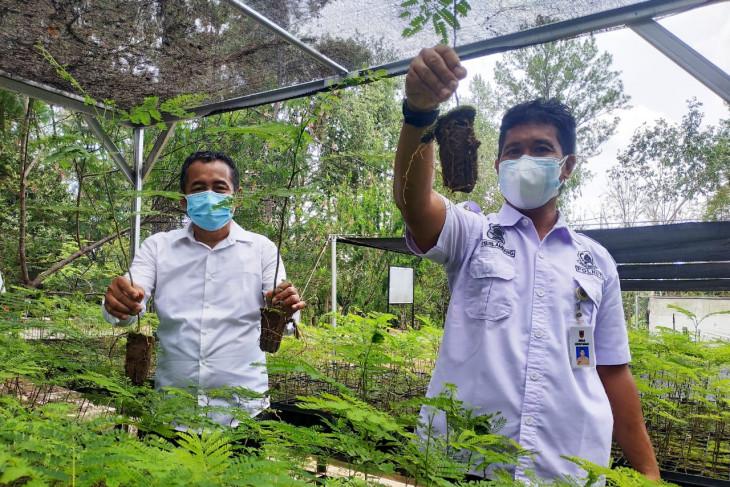 KPH Hulu Sungai siapkan bibit pohon  dan buah-buahan gratis